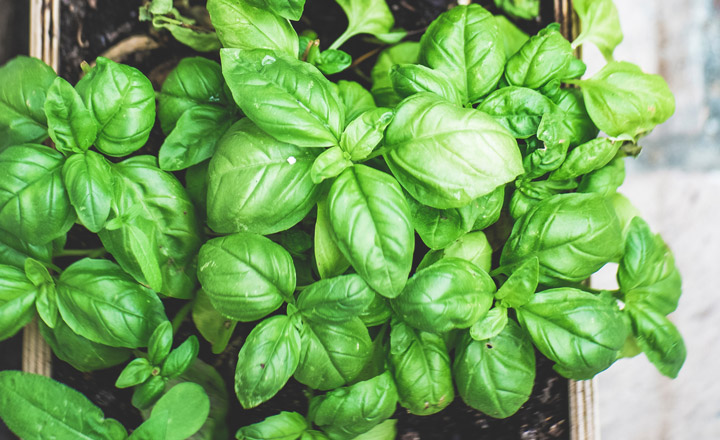 Youth will observe the plant life cycle and then use the herb to create an edible product.