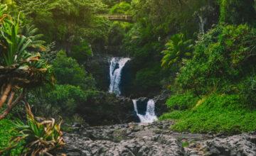 Ecosystem Jungle