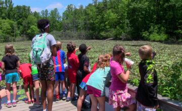 Nature Adventures: Beaver Pond Explorations