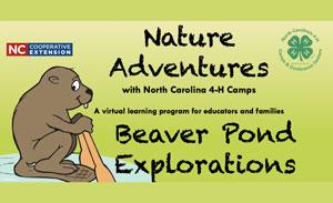 Prezi cover image of a beaver