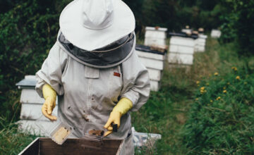 The Busy World of Bees